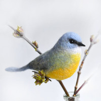 Felt Eastern Yellow Robin bird's doll- Handmade natural action figure of beautiful Australian bird was created in mixed felting technique