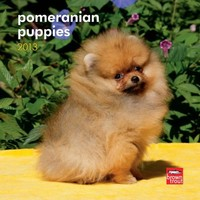 Pomeranian Puppies 2013 7X7 Mini Wall