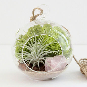Small Rose Quartz Air Plant Terrarium Kit with Chartreuse Moss