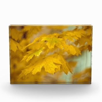 Yellow autumn maple leaves. photo block