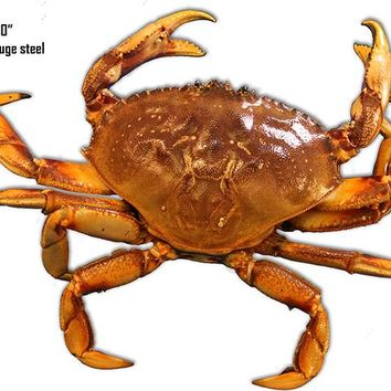 Crab Sea Animal Wall Art Laser Cut Out Metal  Sign 10″x14″