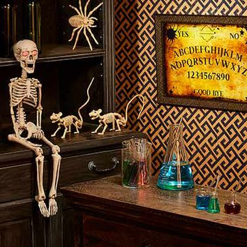 Halloween Curiosities Collection