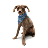 "Julia Grifol ""Floral Winter"" Pet Bandana"