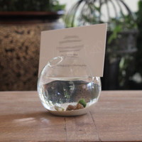 marimo miniature pet Moss aquarium place card business card holder, unique desk accessories Sand Glass ( card-1)