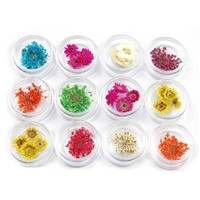 TOOGOO(R) 12 kinds dried flower nail art Ongles decoration