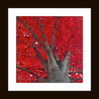 Large wall art, fine nature photography, red and black, 16 X 16 color photography, red wall art, home decor wall art, dorm decor wall art