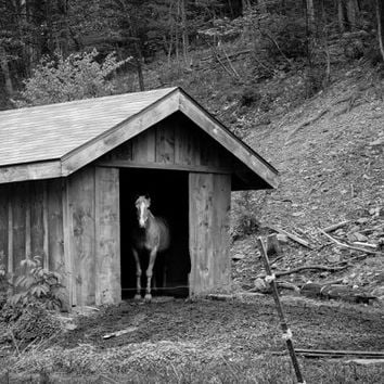 Horse In Shed - Black & White Horse Photography - photography print - farm photography - Upstate NY - EyeWasHere