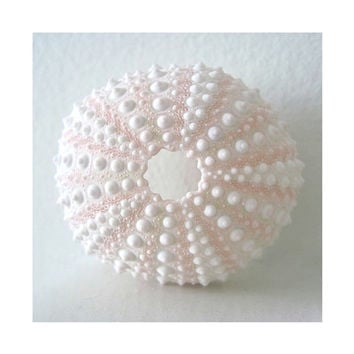Pink Sea Urchin, Fine Art Photograph, Delicate Pale Pink Sea Urchin Shell, Beauty From The Deep, Beach Treasure, Modern Minimalist Macro