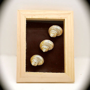 "Seashell Art - Seashell Shadow Box- Handmade Beach Decor- Wall art- Nautical Decor- 9.25"" high by 7.25"" across and 1.75"" Wide One of a kind"