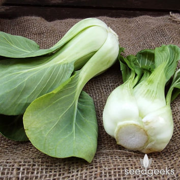 Pak Choi Chinese Cabbage Heirloom Seeds - Non-GMO, Open Pollinated, Untreated
