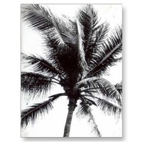 Black and White Palm Post Card from Zazzle.com