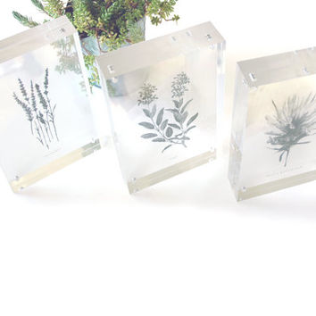 Transparent Nature Print - See-Through Minimalist Plant or Shell Illustration - Floating Botanical or Nautical Art for Clear Acrylic Frame