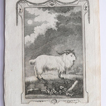 1791 Buffon Engraving, Antique Goat Engraving Ram, Buck of Juda, Original Vintage Farm Animal Art for Groupings, Gift for Home Decor
