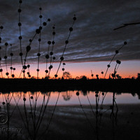 Sunset with Wild Dagga Seed Pods Digital Photograph JPG Download