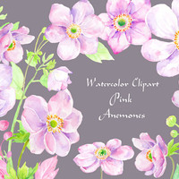 Watercolor pink anemone purple anemone clipart instant download