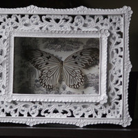 Rice Paper Butterfly - Museum Glass Shadow Frame Display - Insect Bug Oddity Curiosity Art