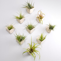 Hive planter- set of 9