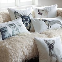 Royal Pets Pillow Cover