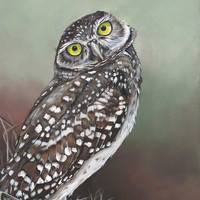 Owl Painting - bird watercolor print-  - Print of Watercolor Painting A4 print