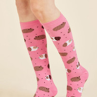 In the Pig Leagues Now Socks