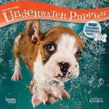 Underwater Puppies Mini Wall Calendar, Funny Dogs by BrownTrout