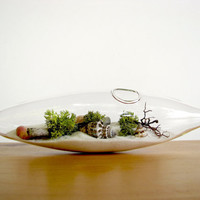 Modern Beach Vessel Lichen Moss Terrarium by TinyTerrains on Etsy