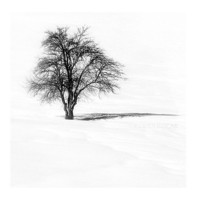 Nature Photography, Tree photography, Landscape, Photography, Winter photography, Snow photography, Black and White,  (8''x8'' inch)