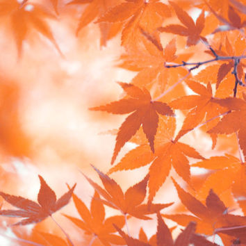 Autumn Leaves Photograph-Autumn Colors,  Maple Leaves, Orange, Red, Rustic, Fall  5x7 Photograph