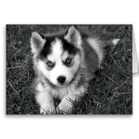 Siberian Husky Puppy Dog Blank Greeting Note Card