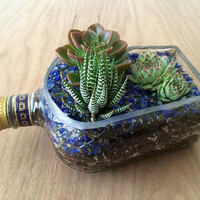 Crown Royal Bottle Garden // Succulent Planter Kit