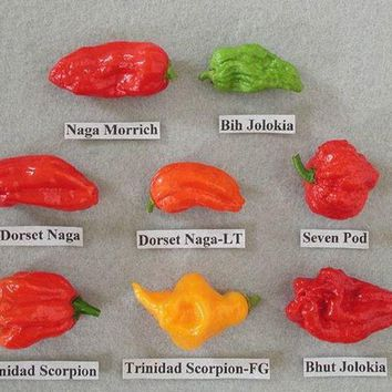 240 Count WARNING WORLDS HOTTEST Pepper Mix Pack Seeds (Top 8 Worlds Hottest Pepper)