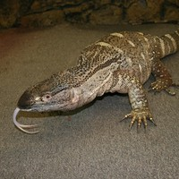 The Reptile Zoo: Bits & Bites | May 2012