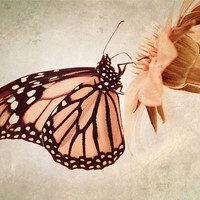 Butterfly Photo, pink -Time Enough - Fine Art Photograph