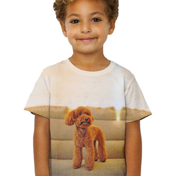 Kids Toy Poodle Watching Closely