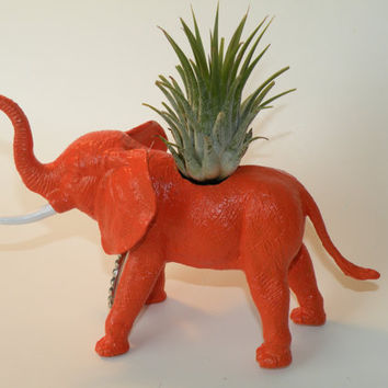 Air plant in elephant animal planter and personalized bottle cap message. Great gift for plant lover.