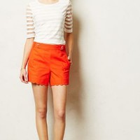 Scalloped Sailor Shorts by Cartonnier