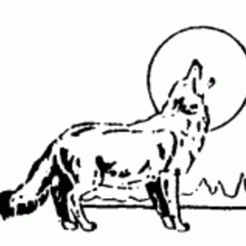 Howling Coyote (1516-D)