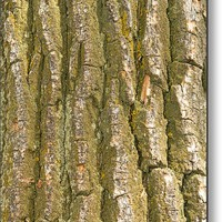 Tree Bark Texture Vertical Metal Print