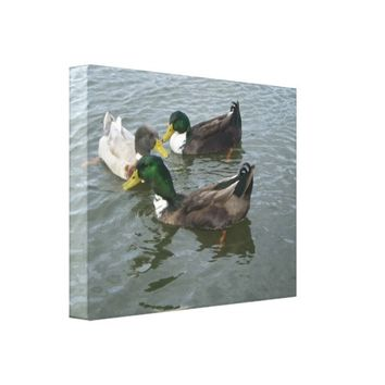 Trio Mallard Ducks Canvas Wrap