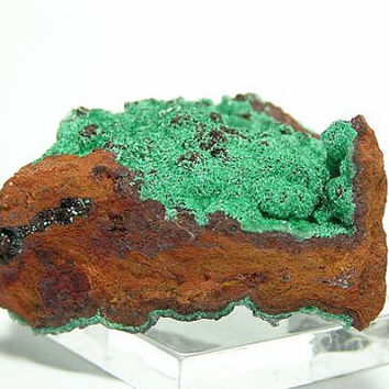 Green Conichalcite Botryoidal 2 sided Mexican Mineral Specimen