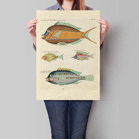 Fish Poster| Sea Life Art| Taxonomy Wall Art| Fishes Wall Art| Fishes Print| Animal Poster| Natural History| Vintage Zoology| HAP002