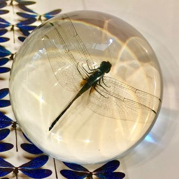 Dragonfly Desk Paperweight