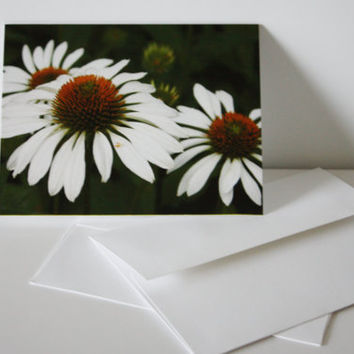White Cone Flowers, Blank Note Card Set, Unique Gifts, Photograph, Lasting Impression, Set of 12 (Set of 6 available)