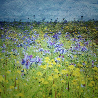 Spring Wildflowers Landscape Photography Print Painterly Wall Art Rustic Home Decor
