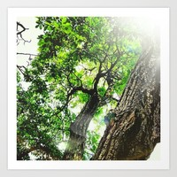 Trees Art Print by Aclements