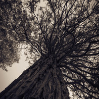 Under The Tree Art Print by Maureen Bates Photography