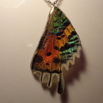 REAL Butterfly Wing Pendant-Necklace