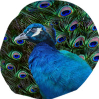 Peacock and Feather Bean Bag Chair created by ErikaKaisersot | Print All Over Me