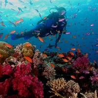 scuba diving - Google Search
