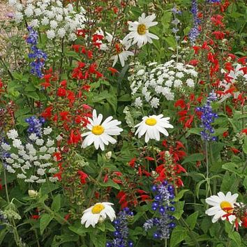 Wildflower Mountain Mix Seeds (7g+Seeds)